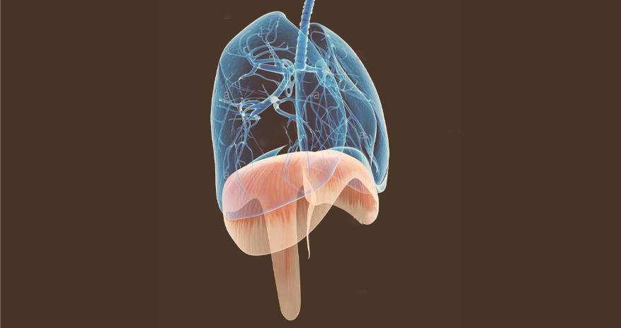 A respiração durante a gestação
